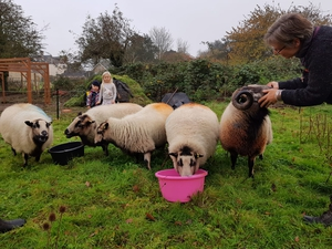 Vicar's flock includes real sheep